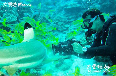 幫鯊魚錄影