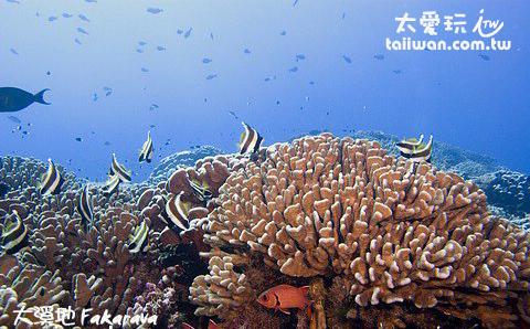 法卡拉瓦Fakarava環礁潛水