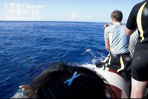 海豚出現了!