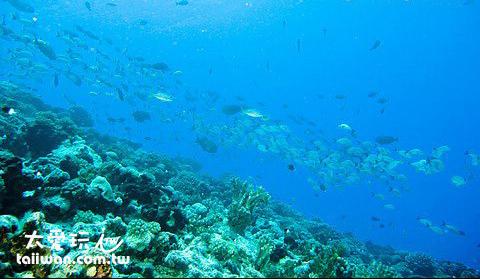 倫吉拉環礁潛水