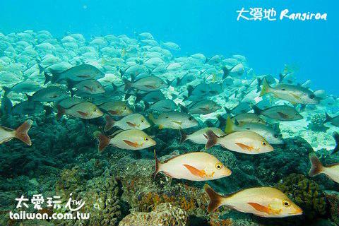 大溪地海底魚類爆多
