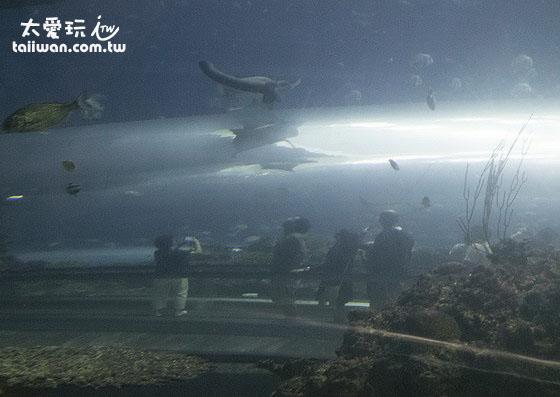 珊瑚王國館海底隧道