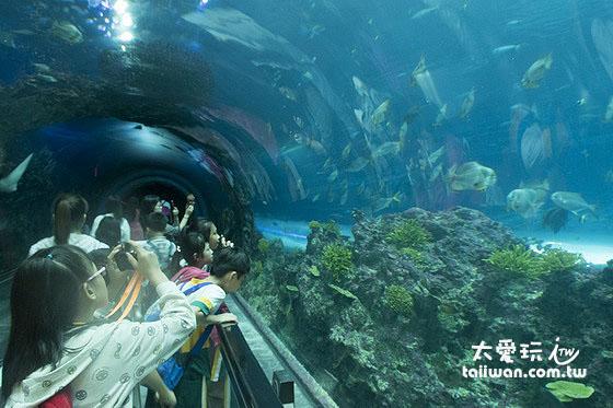驚奇的海底隧道