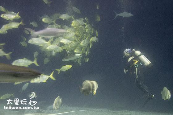 大洋池餵食秀
