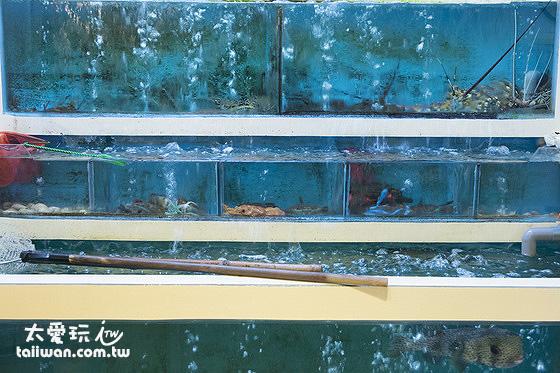 大魚缸裡有活生生的龍蝦、螃蟹、透抽、石斑魚等