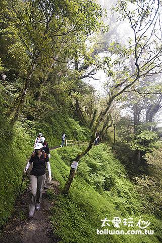 美麗的檜山巨木森林群步道