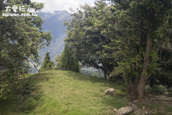 清境天空步道能駐足欣賞羊群覓食