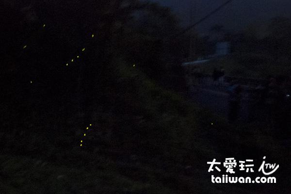 螢火蟲真的不好拍