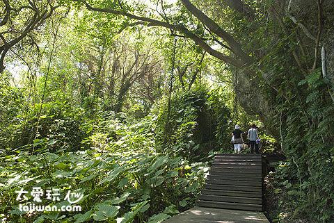 山豬溝是一處擁有原始植物林的地區