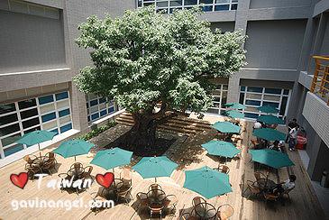 光華數位新天地中庭的保護老樹