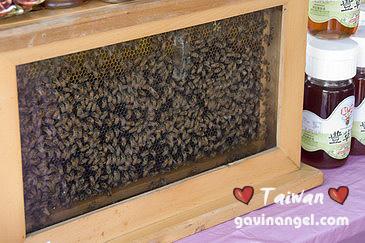 希望廣場小蜜蜂都來囉