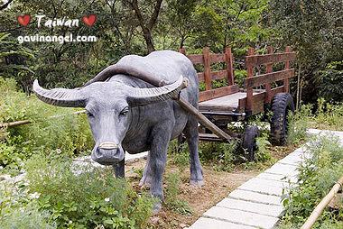 樟樹步道-牛車