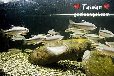 動物園有魚可以看喔