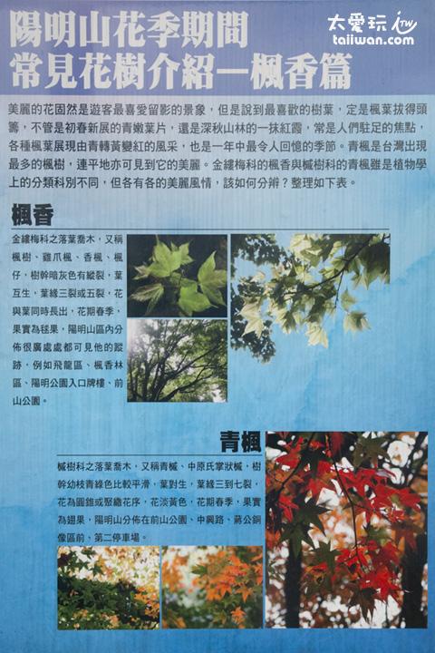 陽明山常見花樹介紹