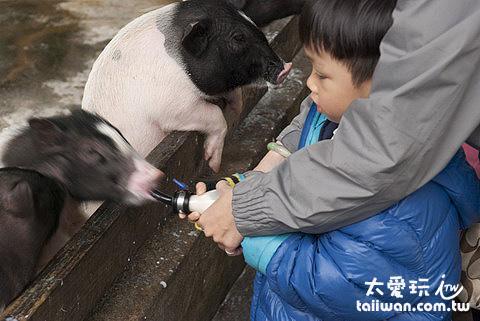 宜農牧場餵食小動物