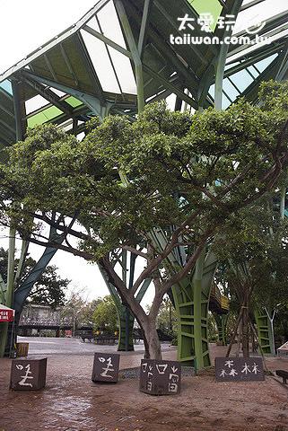 丟丟噹廣場的鐵樹森林