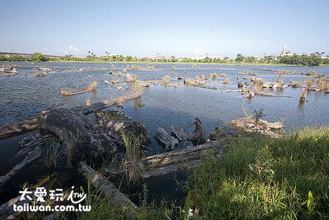 羅東林場貯木池