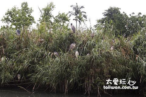 水草上面棲息著超級多候鳥