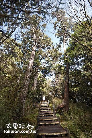 太平山步道森林浴