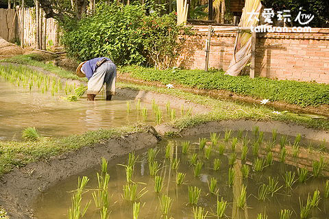 The Dhara Dhevi Hotel Chiang Mai真的有農夫在種田