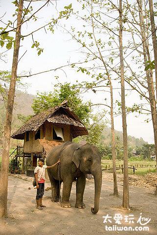 Patara大象農場