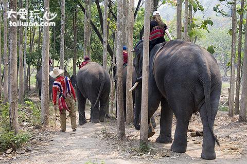 騎大象散步去