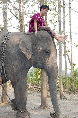 徒手騎大象剛開始還真的會怕