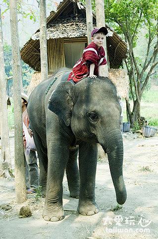 大象農場-連小孩子都很上手