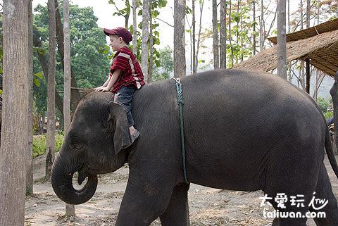 大象農場-小孩子也騎得有模有樣