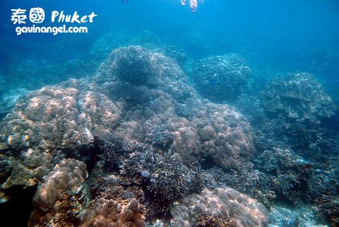浮潛地點的水下風光