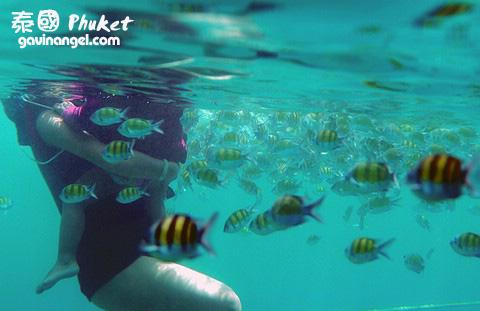 浮潛時可餵魚